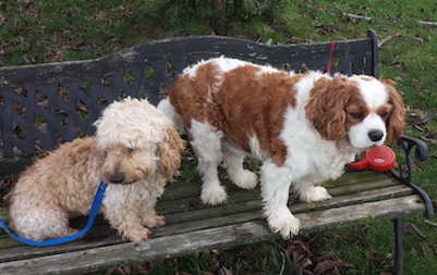 Cooper and Mayzie on the Bench